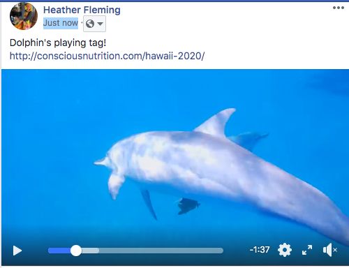 Dolphin's playing tag!